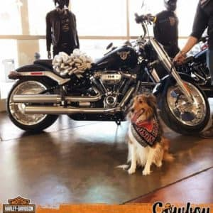 Cowboy Harley Davidson Party With Us Pic dog next to bike